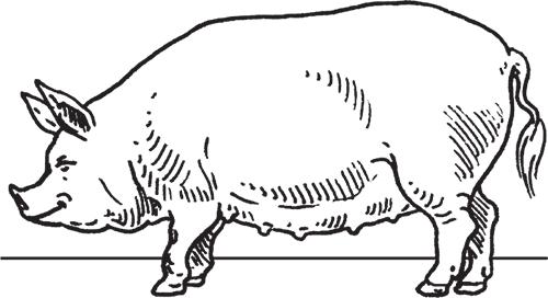 Фермерское свиноводство книга