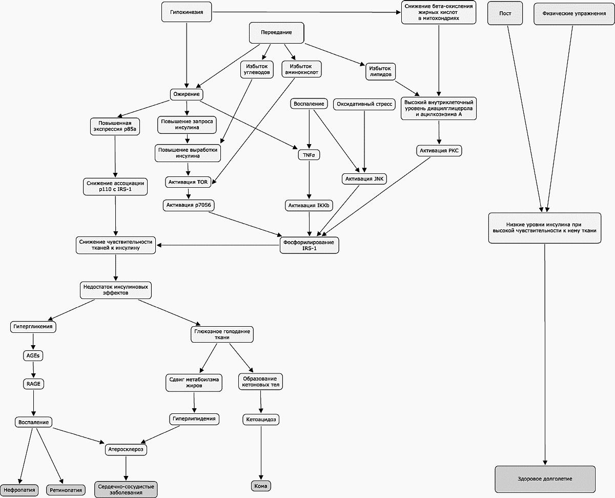 патогенез сахарного диабета 2 типа схема