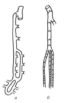 Травы при варикозе ног