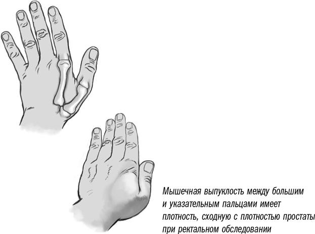 Фото палец в уретру, как красиво ласкать себя перед мужчиной